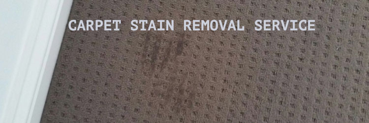 Carpet Stain Removal Service in Springfield