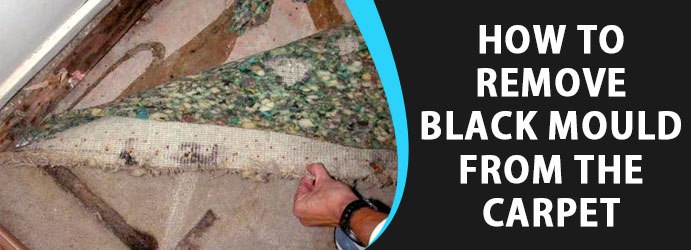 How To Remove Black Mold From Carpet