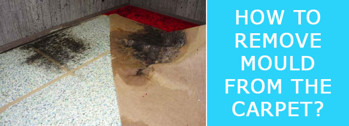 Remove Mould from the Carpet
