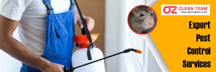Expert Pest Control Launceston