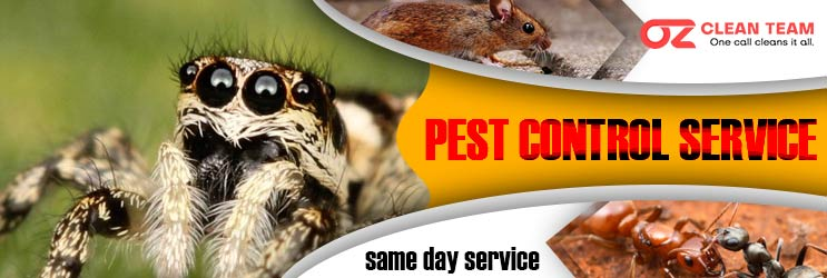 Expert Pest Control Perth