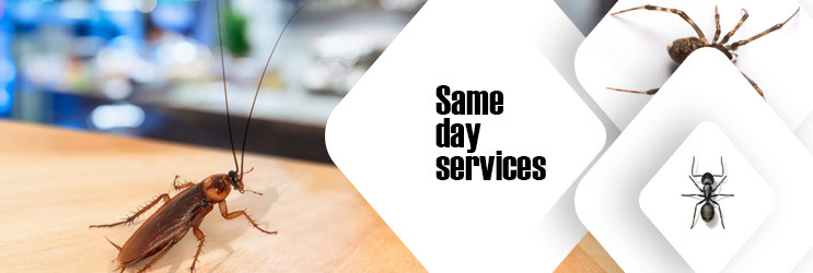 Same Day Pest Control Sydney
