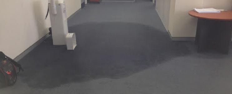 Carpet Sanitising