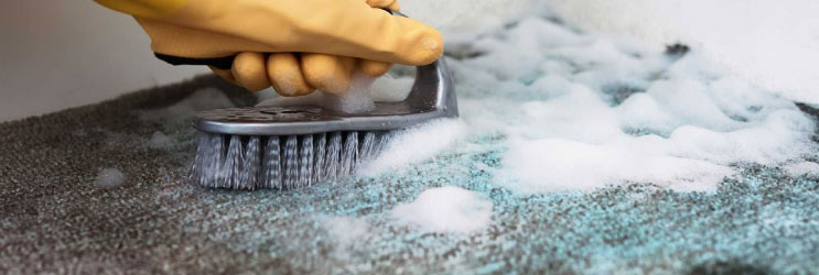 Mould Carpet Cleaning Service